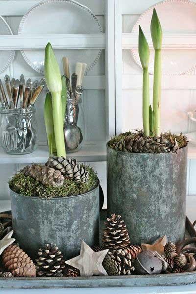 D corer son int rieur d amaryllis les conseils pour for Arrosage amaryllis floraison