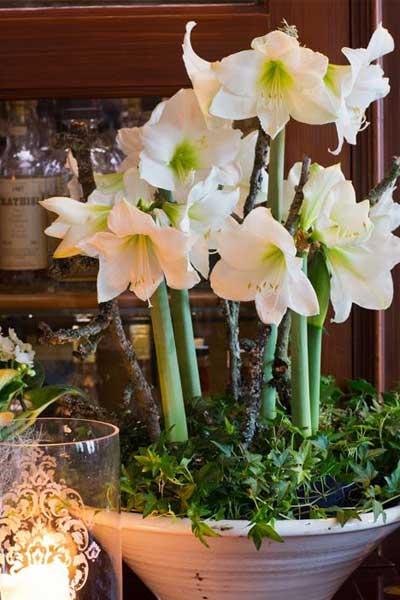 D corer son int rieur d amaryllis les conseils pour for Amaryllis en bouquet