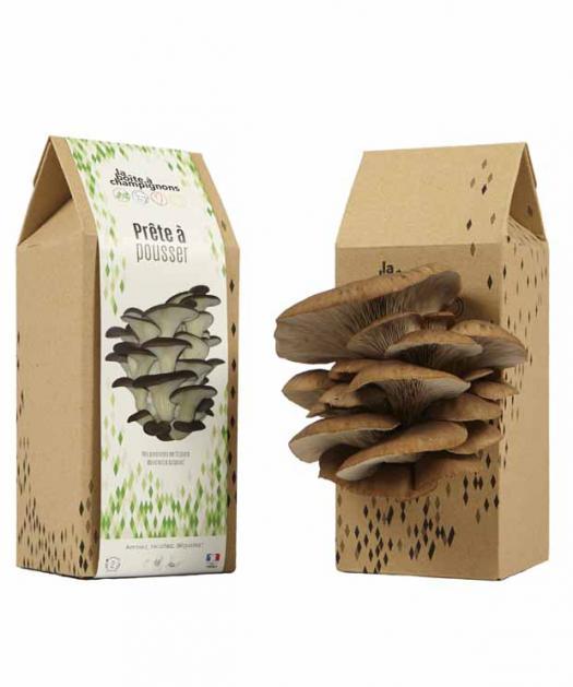 boite a champignons prete a pousser