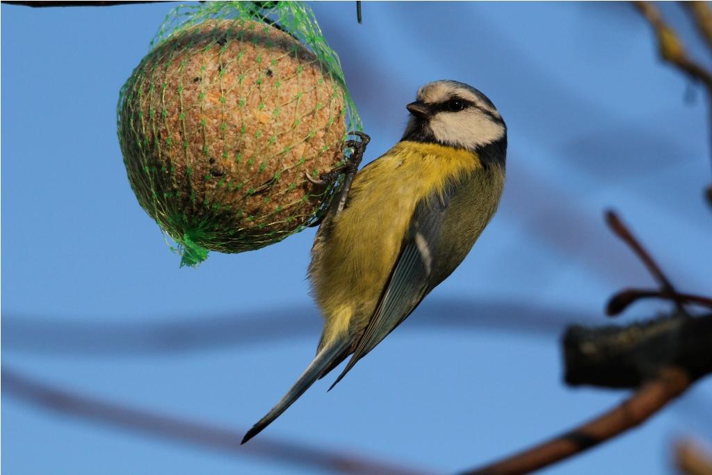 comment accueillir les oiseaux en hiver les conseils pour votre jardin de willemse france. Black Bedroom Furniture Sets. Home Design Ideas