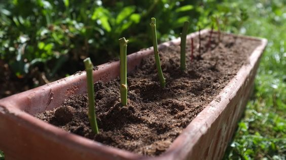 Bouturer ses plantes : Tout un art !