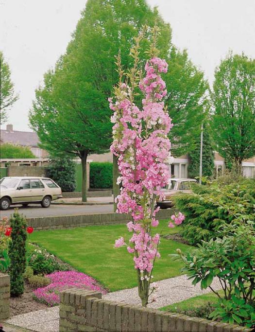 3 superbes arbustes floraison printani re pour cr er un. Black Bedroom Furniture Sets. Home Design Ideas