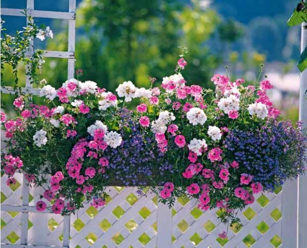 10 conseils pour r ussir sa jardini re les conseils pour. Black Bedroom Furniture Sets. Home Design Ideas