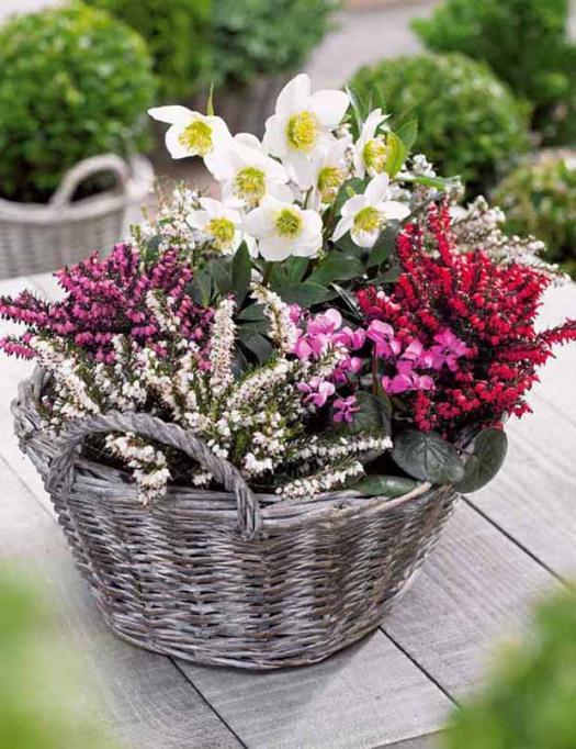collection_decor_d_hiver_4_plantes