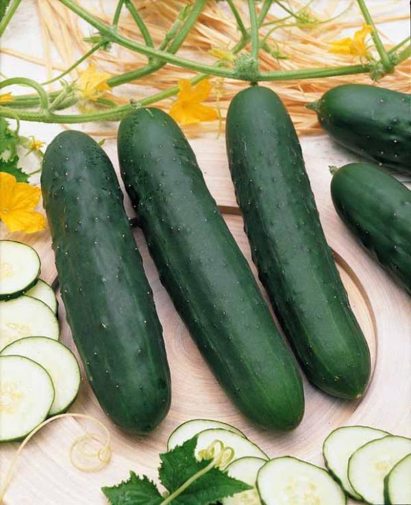 10 l gumes indispensables au potager les conseils pour for Entretien concombre jardin