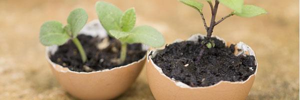 Coquilles d ufs dans le jardin quelles utilit s les conseils pour votre jardin de - Coquille d oeuf dans le jardin ...