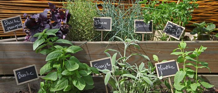 mon petit coin d herbes aromatiques les conseils pour votre jardin de willemse france. Black Bedroom Furniture Sets. Home Design Ideas