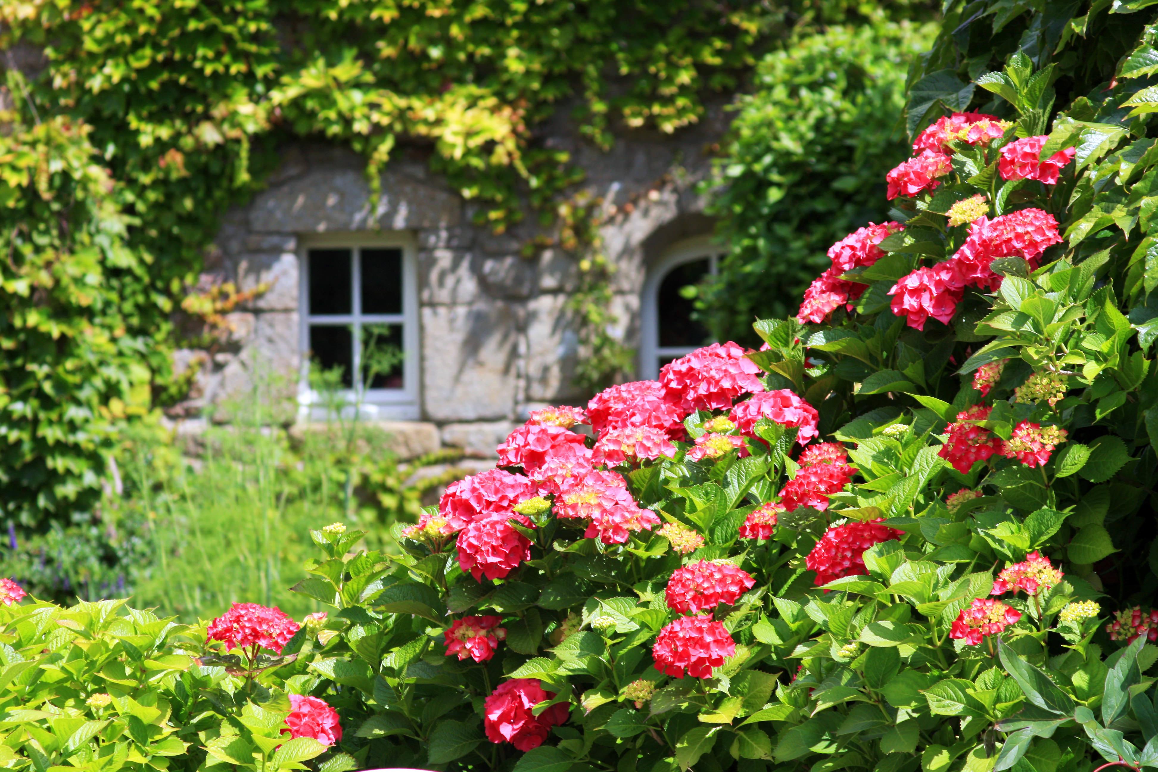 mes hortensias les conseils pour votre jardin de. Black Bedroom Furniture Sets. Home Design Ideas