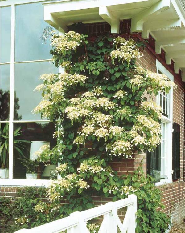 comment planter plantes grimpantes au jardin en pot. Black Bedroom Furniture Sets. Home Design Ideas