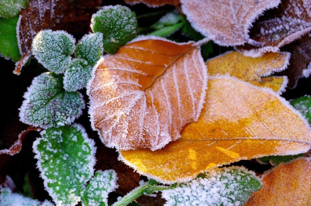 Un jardin qui r siste au gel les conseils pour votre for Jardin willemse