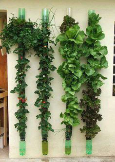 Cr er un jardin vertical les conseils pour votre jardin for Construire un mur vegetal avec une palette