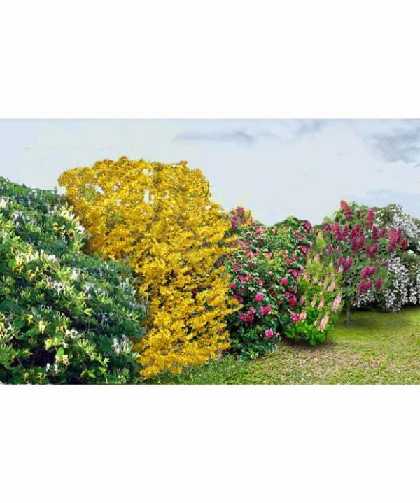 Le jardin sauvage les conseils pour votre jardin de for Willemse jardin