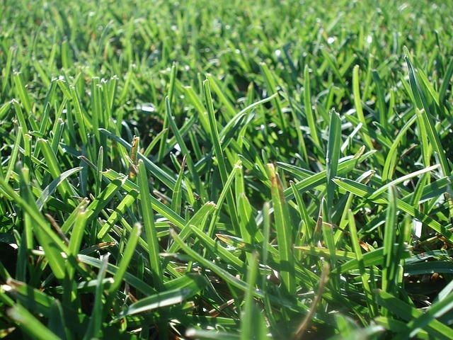 lawn-1224459_640