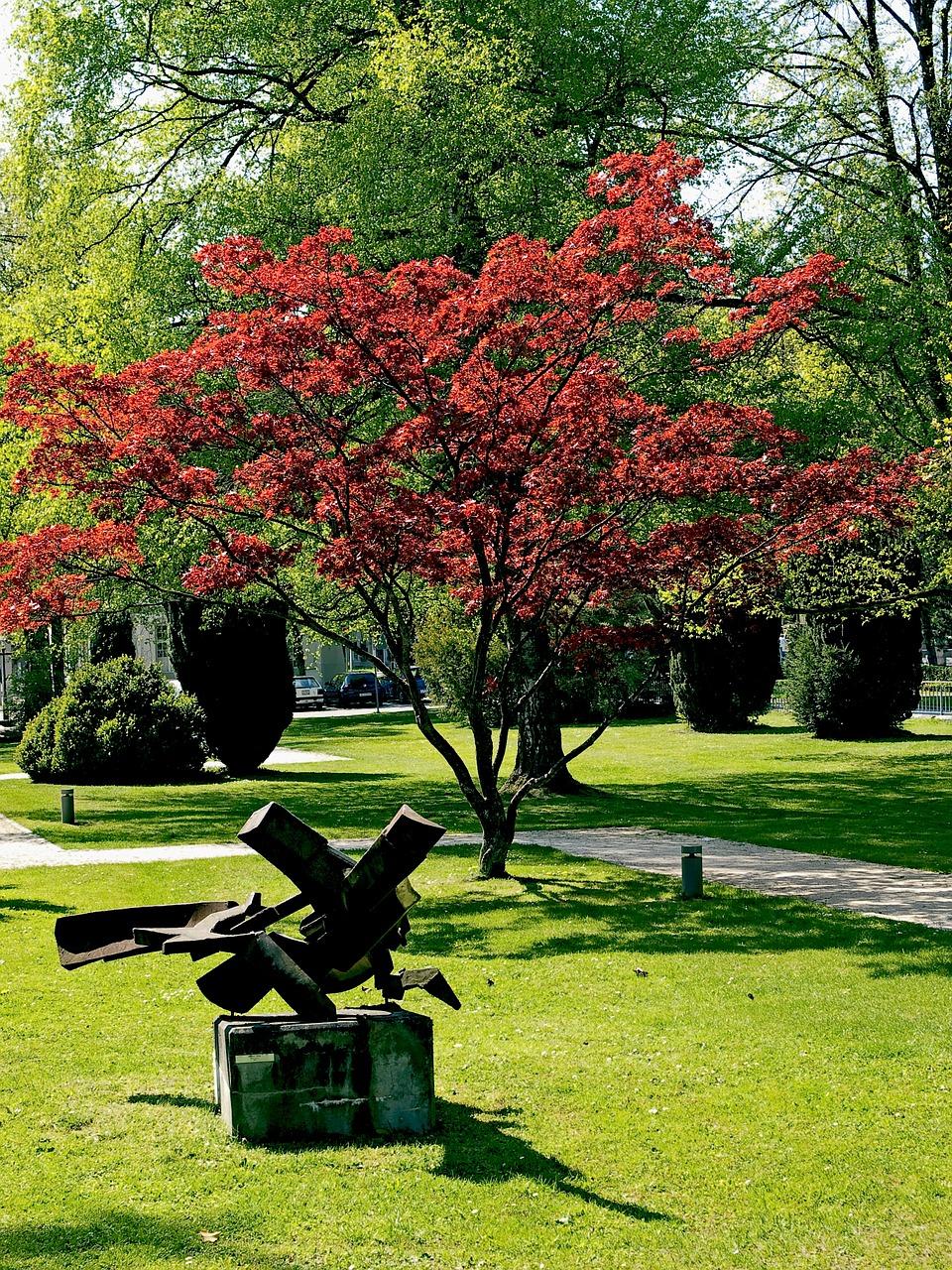 L rable du japon une tendance mais avec quoi l associer les conseils pour votre jardin de - Arbre du japon ...
