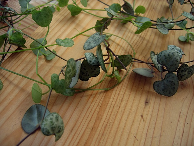plant-578912_640