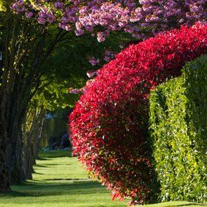 Plantation archives les conseils pour votre jardin de for Conseil plantation jardin