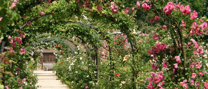 Une roseraie chez soi les conseils pour votre jardin de for Jardin willemse
