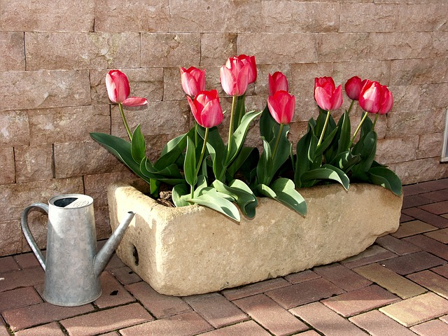 tulips-1002203_640