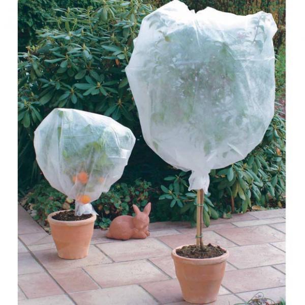 Trucs et astuces prot ger vos plantes du gel les for Protection plante gel