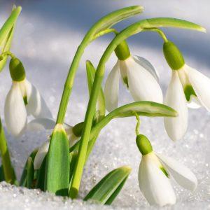 Que faire au jardin en hiver archives les conseils pour votre jardin de willemse france - Que faire au jardin en novembre ...