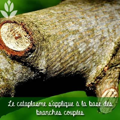 cataplasme sur branches coupées