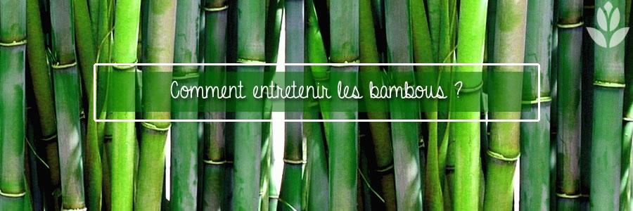 comment entretenir les bambous