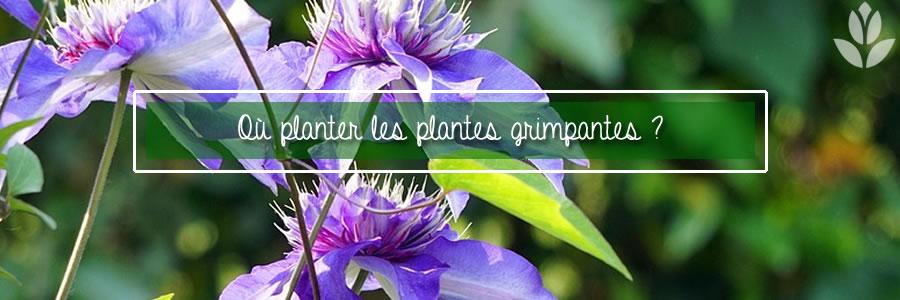où plnater les plantes grimpantes ?