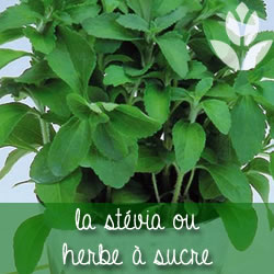 stevia jardin