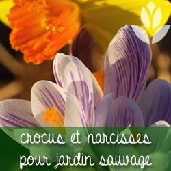 jardin suavge crocus