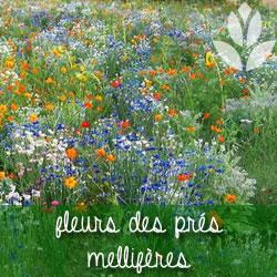 graines de fleurs