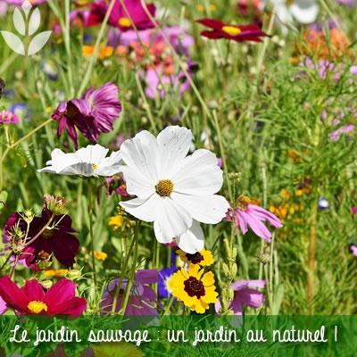 le jardin sauvage et naturel