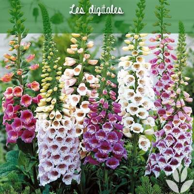 digitales plantes