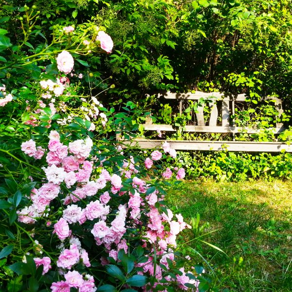jardin romantique bleu mauve les conseils de willemse. Black Bedroom Furniture Sets. Home Design Ideas