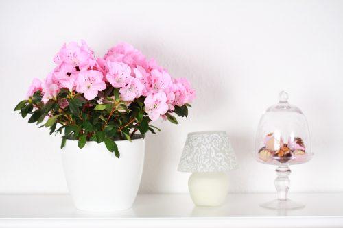 Quelles Fleurs Pour Valoriser Votre Interieur Willemse Vous Conseille