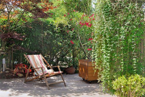 des plantes pour se cacher des voisins vite willemse vous conseille. Black Bedroom Furniture Sets. Home Design Ideas