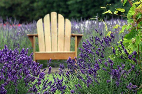 Jardin méditerranéen: les conseils de Willemse, spécialiste du jardinage
