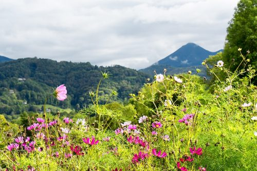 Un jardin en montagne des plantes et des astuces de jardinage utiles - Jardin de montagne ...