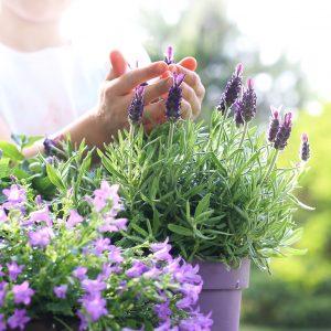 Terrasse et balcon les conseils pour votre jardin de for Jardin willemse