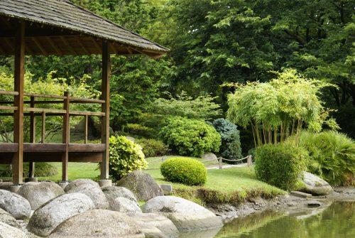 comment entretenir les arbres et arbustes willemse. Black Bedroom Furniture Sets. Home Design Ideas