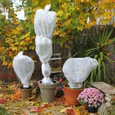 voile d 39 hivernage sur plantes en pots les conseils pour. Black Bedroom Furniture Sets. Home Design Ideas