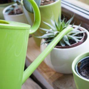 comment entretenir une orchid e willemse le sp cialiste des jardins vous conseille. Black Bedroom Furniture Sets. Home Design Ideas