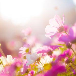 Jardin les conseils pour votre jardin de willemse france for Jardi conseil