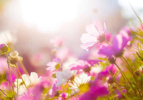 Quelles fleurs choisir pour son jardin willemse le for Jardin willemse