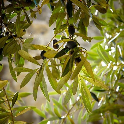 olive et olivier