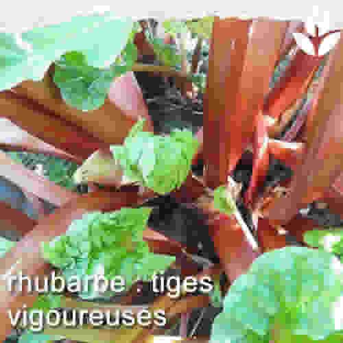 la rhubarbe de l'intérieur