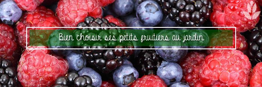 Bien choisir ses petits fruitiers