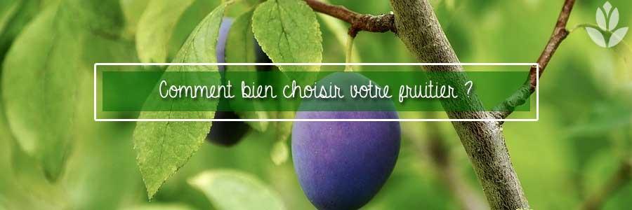 Bine choisir un fruitier pour le jardin
