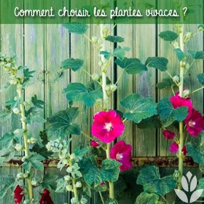 comment choisir les plantes vivaces