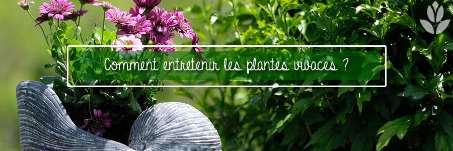 comment entretenir les plantes vivaces?