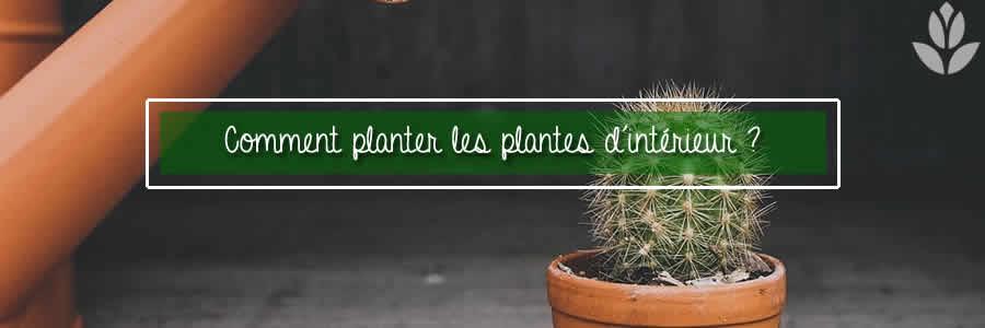comment planter plantes interieur